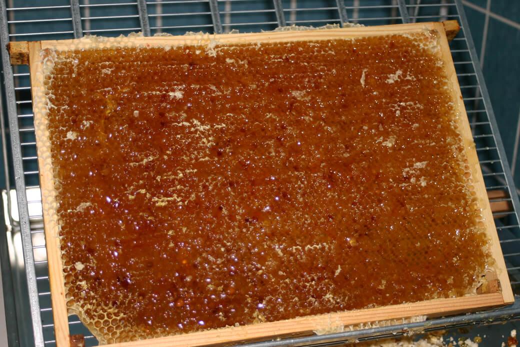 Slyngeklar honningtavle. Foto: © Maria Gram