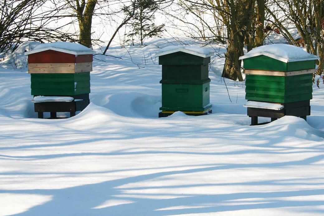 Vinter i bigården. Foto: © Maria Gram